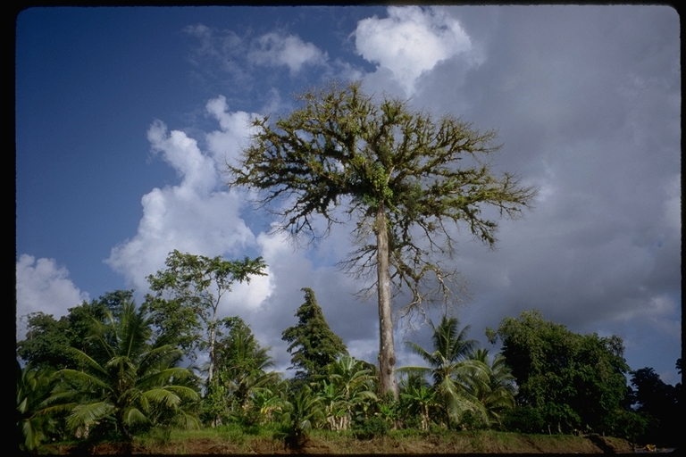 the decreasing numbers of rain forest in the world Deforestation in brazil's amazon forests has flipped from a decreasing to an increasing amazon deforestation trend on the increase source: world wildlife fund.