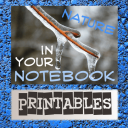 blue nature notebook graphic thumb 50 Keep Me Homeschooling Activities During the Long Cold Winter Days