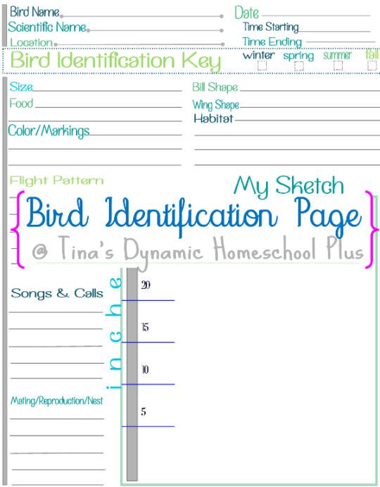 bird identificatioin page collage