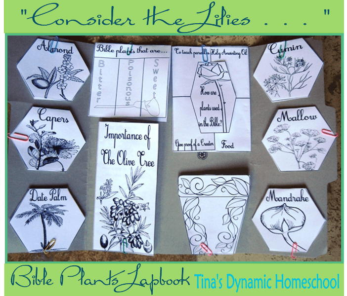 Consider the Lilies Bible Plant Lapbook