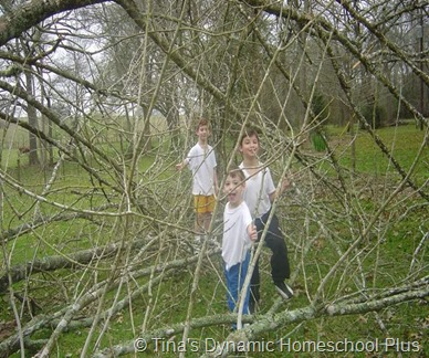 Boys Outside Playing with Branches thumb Treasure the Moments of Homeschooling Testosterone Armed Teen Boys