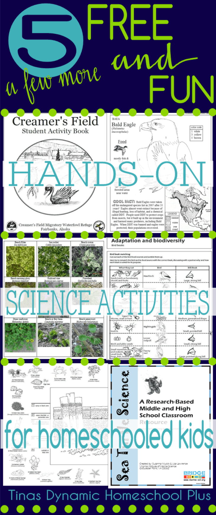 5 FUN and FREE Hands-on Science Activities for Homeschooled Kids @ Tina's Dynamic Homeschool Plus