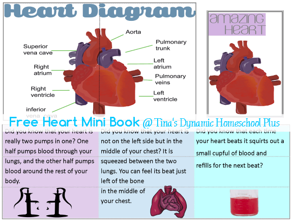 Heart Mini Book @ Tina's Dynamic Homeschool Plus
