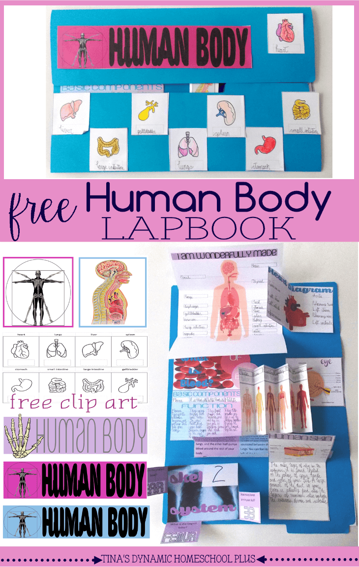 Free Human Body Lapbook and Unit Study @ Tina's Dynamic Homeschool Plus