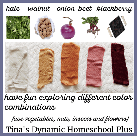vegetables-fruits-and-nuts-are-used-for-natural-dyes-4-tinas-dynamic-homeschool-plus