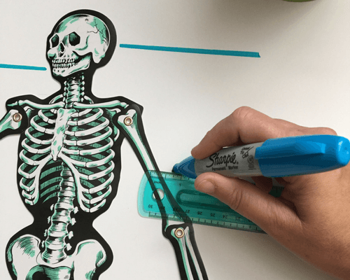 Hands-On Skeleton Activity