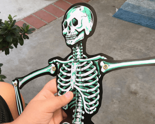 Using a Paper Skeleton