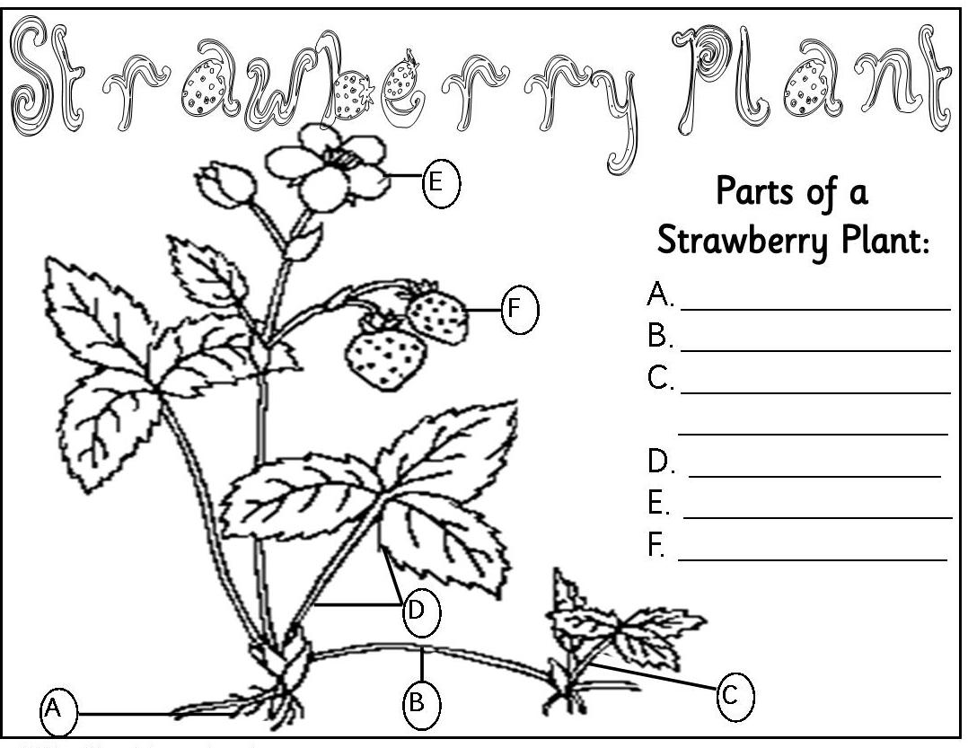 Parts The Plant Coloring Pages Parts Of A Plant Coloring Page