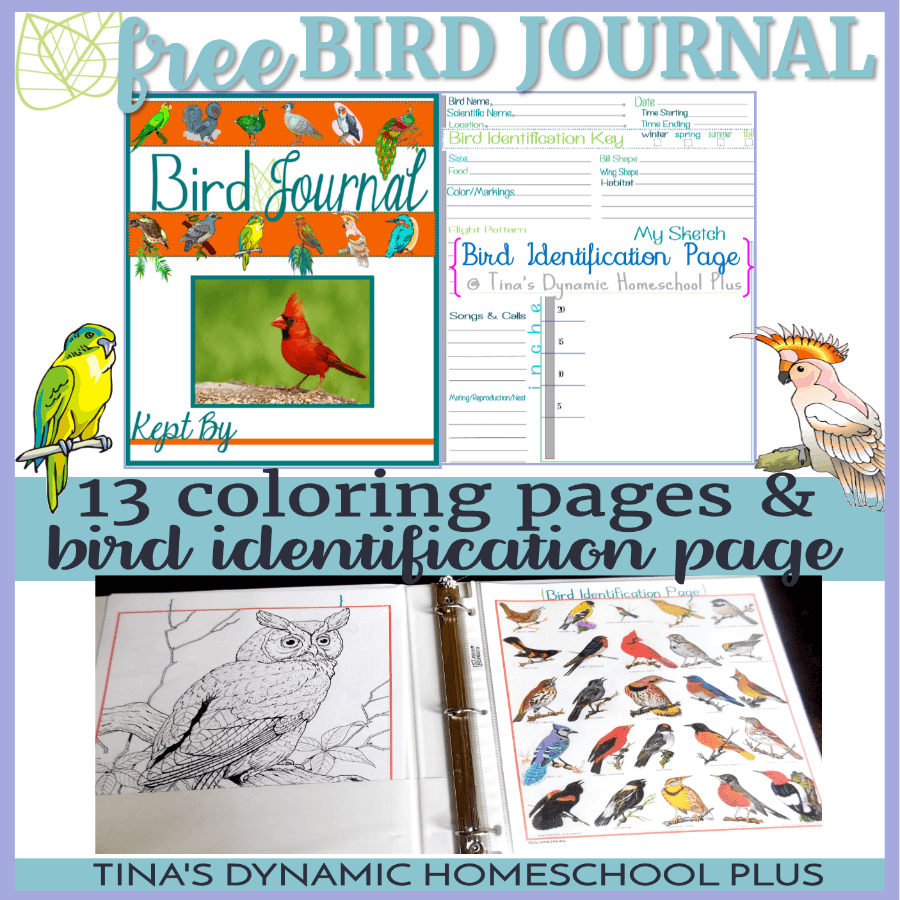 Grab this free and fun Bird Journal which includes high quality coloring pages and bird identification page which allows plenty of room for sketching and noting birding details. CLICK HERE to grab it!