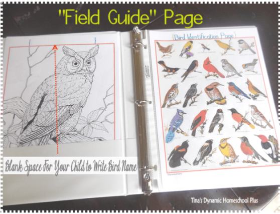 bird notebook field page