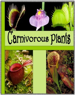 Cover Green Carnivorous Plants @ Tina's Dynamic Homeschool Plus