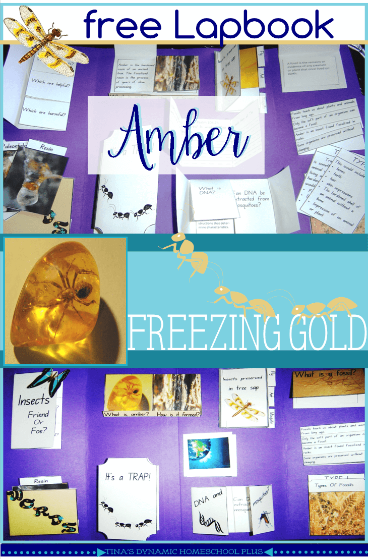 Free Amber Freezing Gold Lapbook