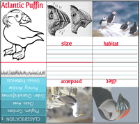 Mini book atlantic puffin 12