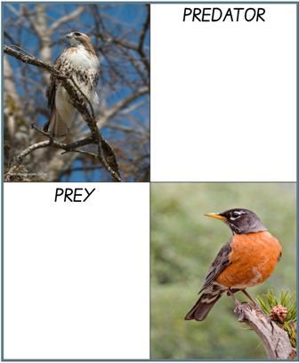 Predator - Prey