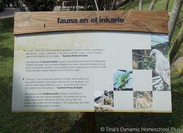 fauna of the inca