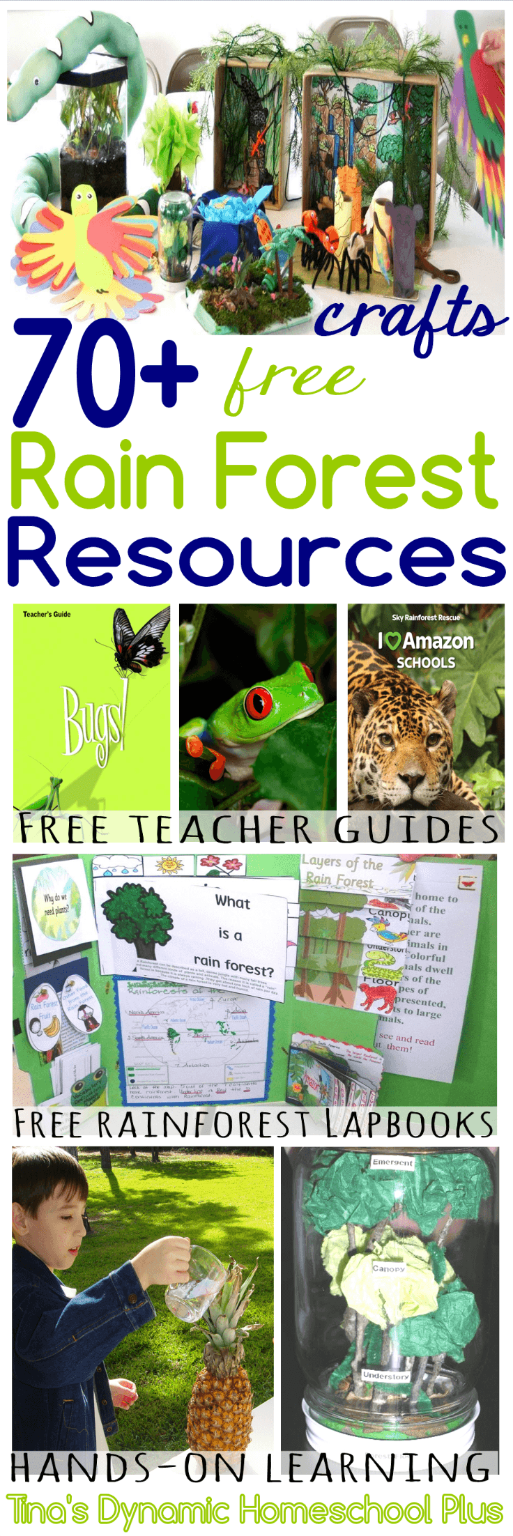 Over 70 Free Amazon Rain Forest Resources! Great for a homeschool unit study or just learning about the Amazon Rain Forest. Click here to grab these AWESOME resources!