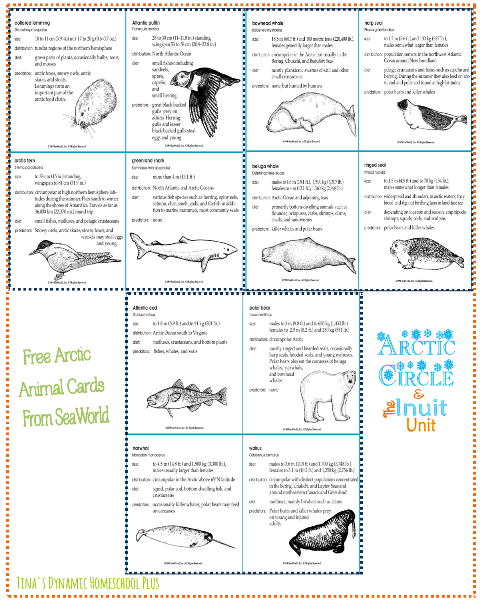 Free Arctic Animal Cards @ Tina's Dynamic Homeschool Plus