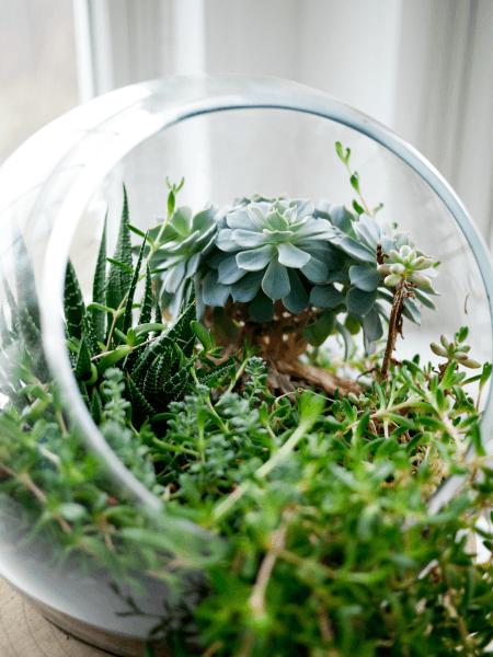 Middle School Kids can create a terrarium @ Tina's Dynamic Homeschool Plus