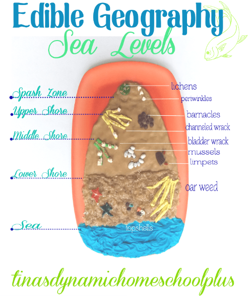 Edible Geography Sea Levels @ Tina's Dynamic Homeschool Plus