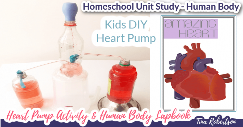 Homeschool Unit Study Human Body. Hands-On Activity DIY Heart Pump and Human Body Lapbook