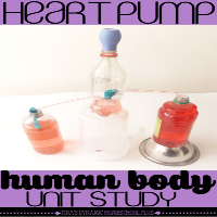 Human body unit study DIY Heart Pump @ Tina's Dynamic Homeschool Plus featured
