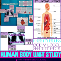 Body Part Labeling and Human Skeleton Quiz Free Minibooks - Free Human Body Unit Study @ Tina's Dynamic Homeschool Plus FEATURED