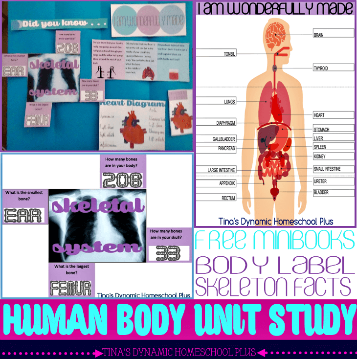 Body Part Labeling and Human Skeleton Quiz Free Minibooks - Free Human Body Unit Study @ Tina's Dynamic Homeschool Plus