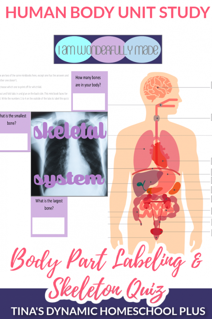 Body Part Labeling and Skeleton Quiz Human Body Unit Study