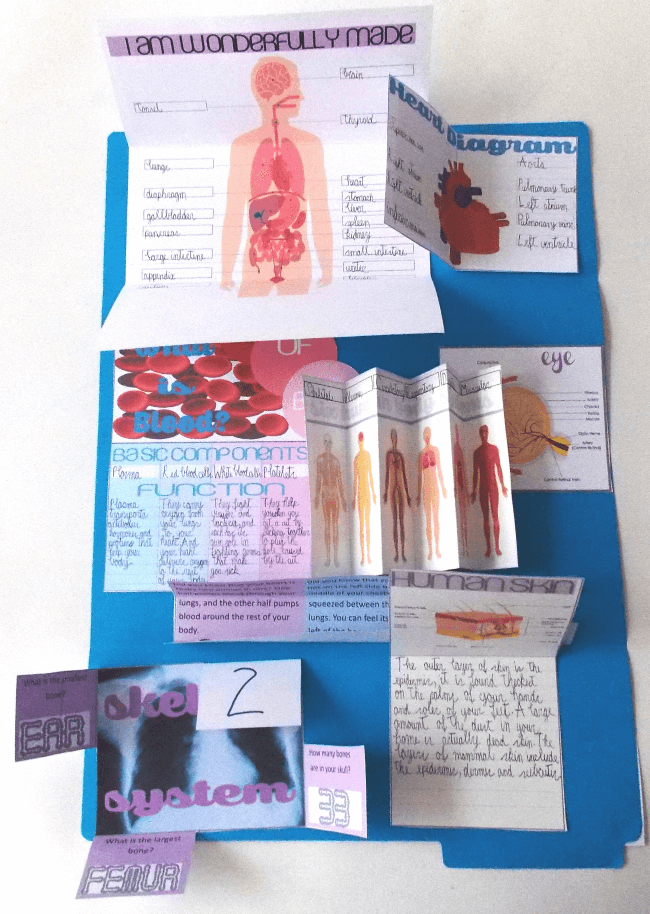 Human Body Lapbook @ Tina's Dynamic Homeschool Plus