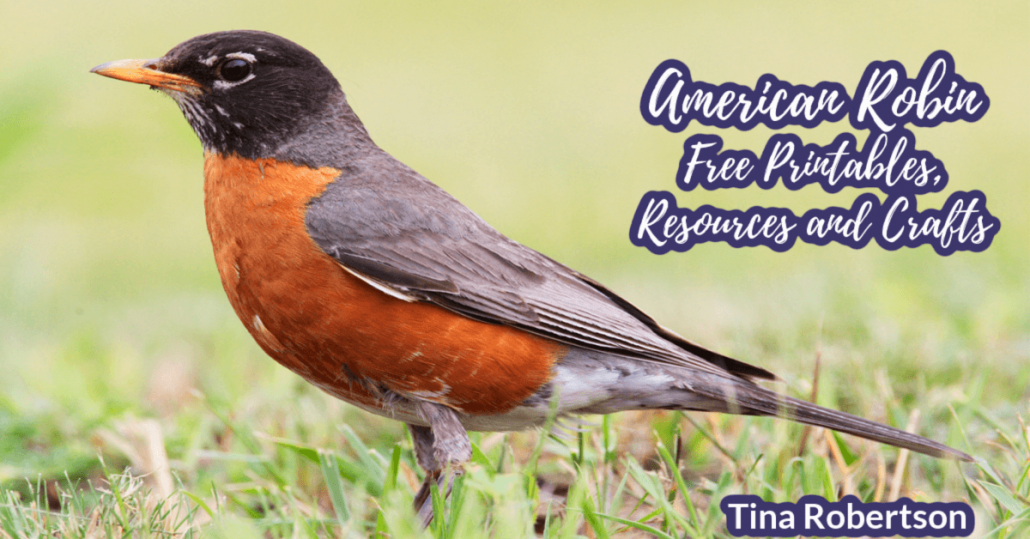 American Robin Free Printables, Resources and Crafts