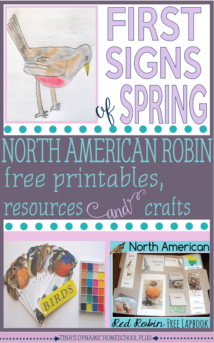 American Robin Free Printables, Resources and Crafts @ Tina's Dynamic Homeschool Plus