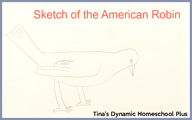Sketch of the American Robin @ Tina's Dynamic Homeschool Plus