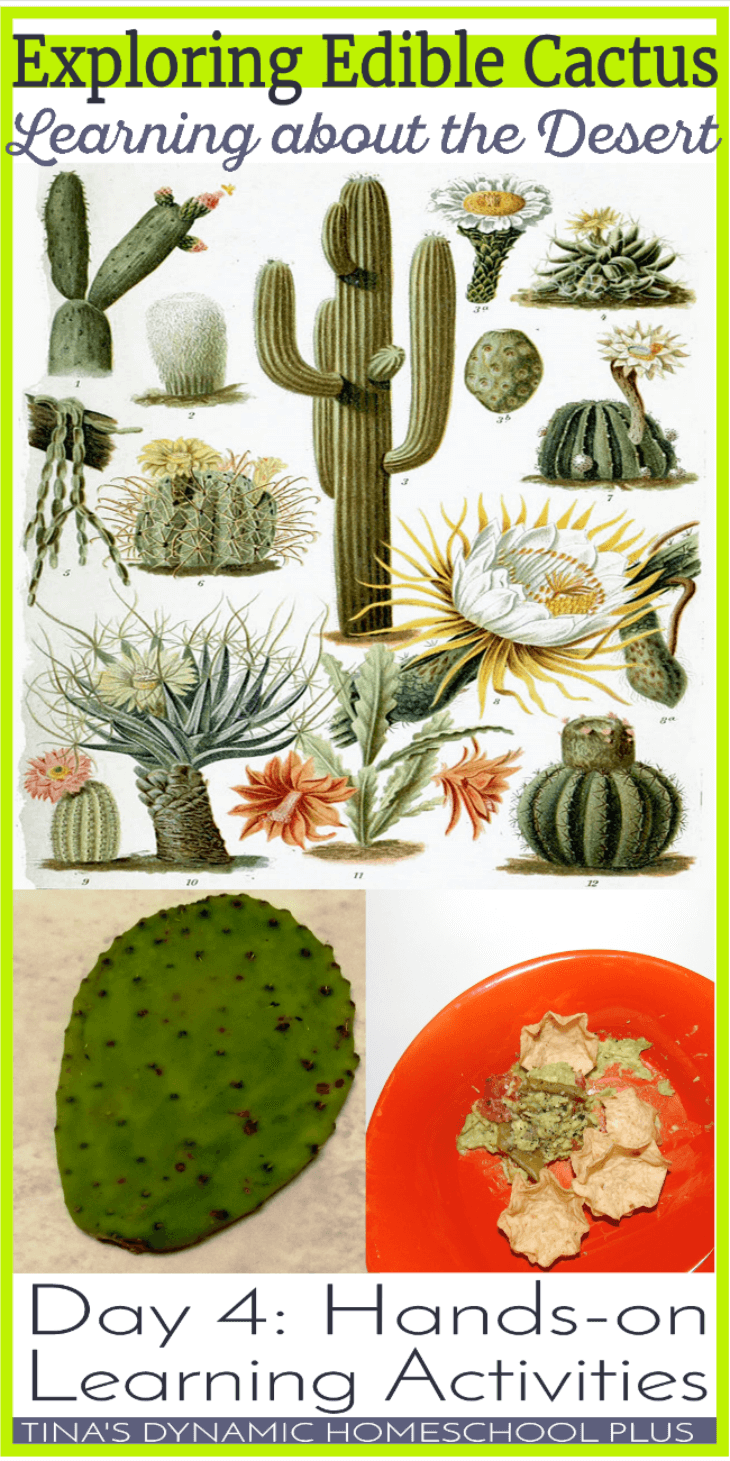 Exploring Edible Cactus. Learning about the desert. @ Tina's Dynamic Homeschool Plus