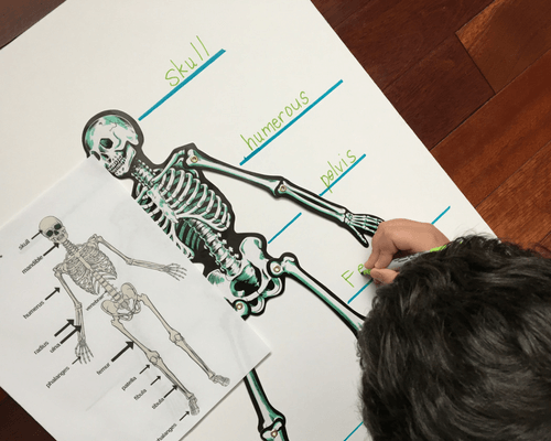 Labeling a Skeleton