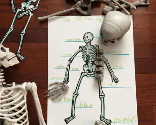Comparing Skeleton Bones