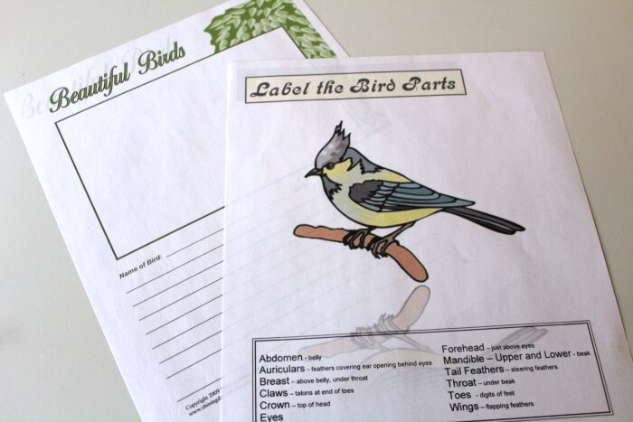 Anatomy Of A Bird Tinas Dynamic Homeschool Plus