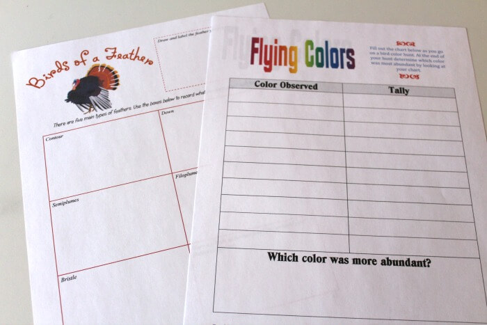 Bird Color Observation Sheets