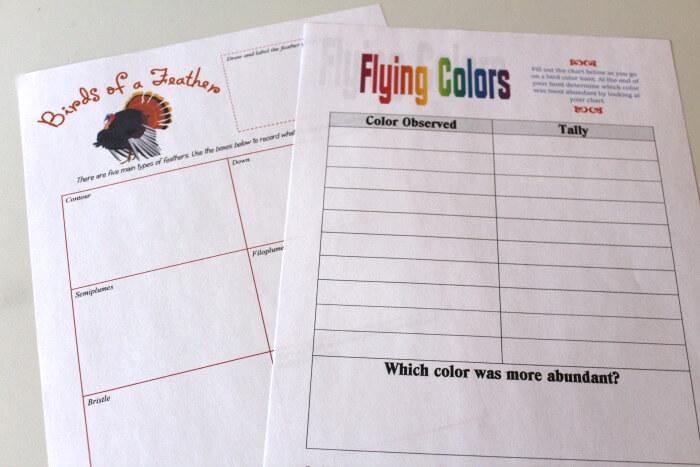 Bird Color Observation Sheets