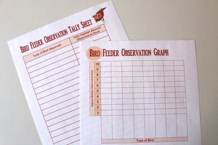 Bird Feeder Observation Sheets