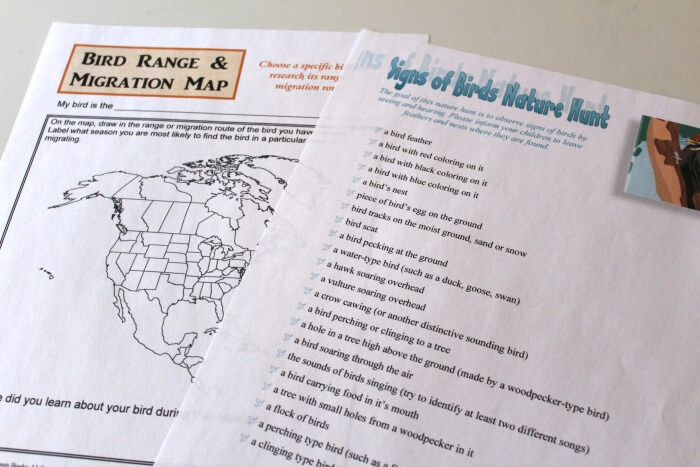 Bird Migration Notebooking Pages