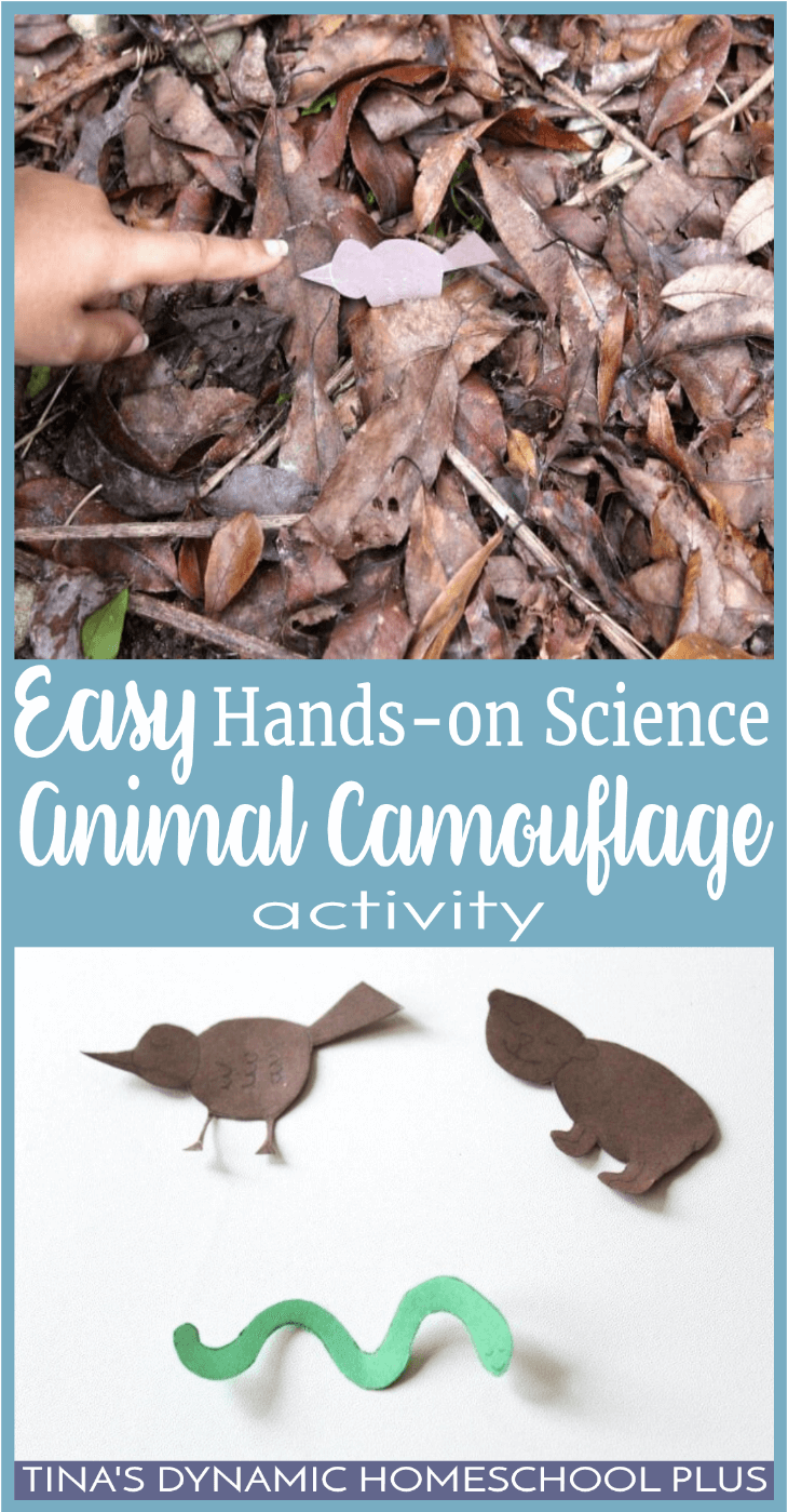 We've been learning so much about how animals adapt to colder temperatures. But if you don't spot any animals, this easy activity works too in your backyard. Click here for a fun nature activity on animal camouflage.