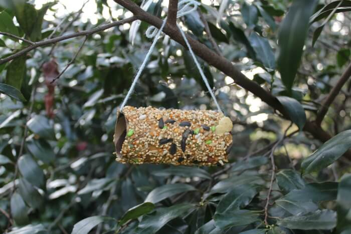 Easy Hanging Birdseed Feeder for Kids to Make