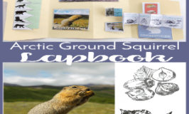 Free Arctic Ground Squirrel Lapbook & Unit Study Resources (The Nature Book Club Link Up 2)