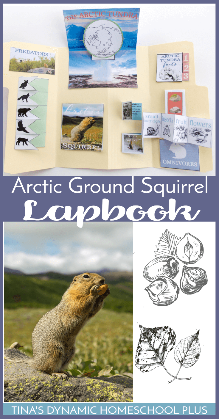 If you're studying about the tundra or the Arctic Ground Squirrel, you'll love these fun and easy resources. Get the free Arctic Ground Squirrel lapbook and unit study resources. Click here!!