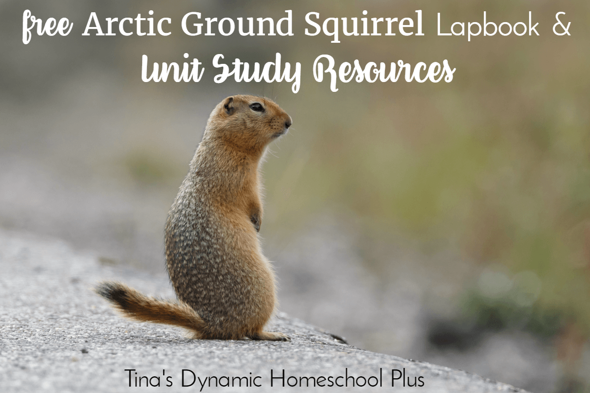 Free Arctic Ground Squirrel Lapbook & Unit Study Resources