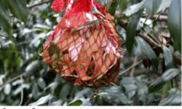 Hands-On Nature Study: Make a Fun Bird Nesting Bag