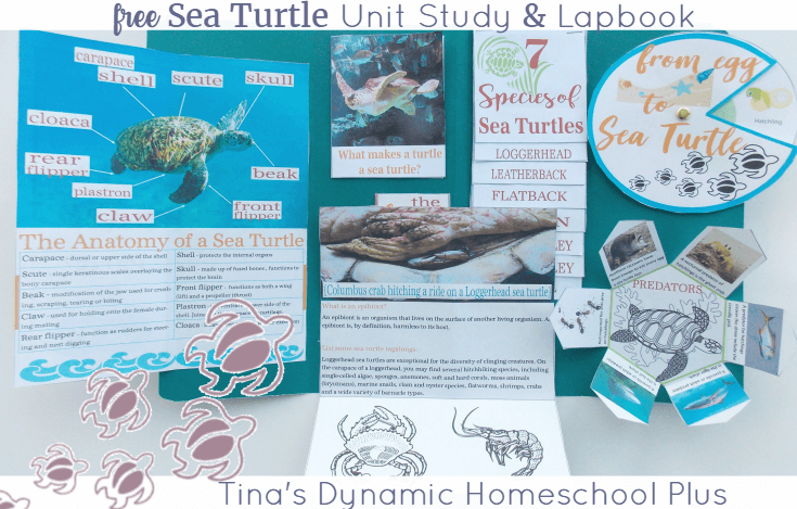 Grab this FREE Sea Turtle Lapbook | Tina's Dynamic Homeschool Plus
