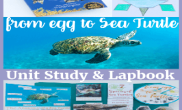 From Egg to Sea Turtle Nature Unit Study & Lapbook (The Nature Book Club Link Up 4)