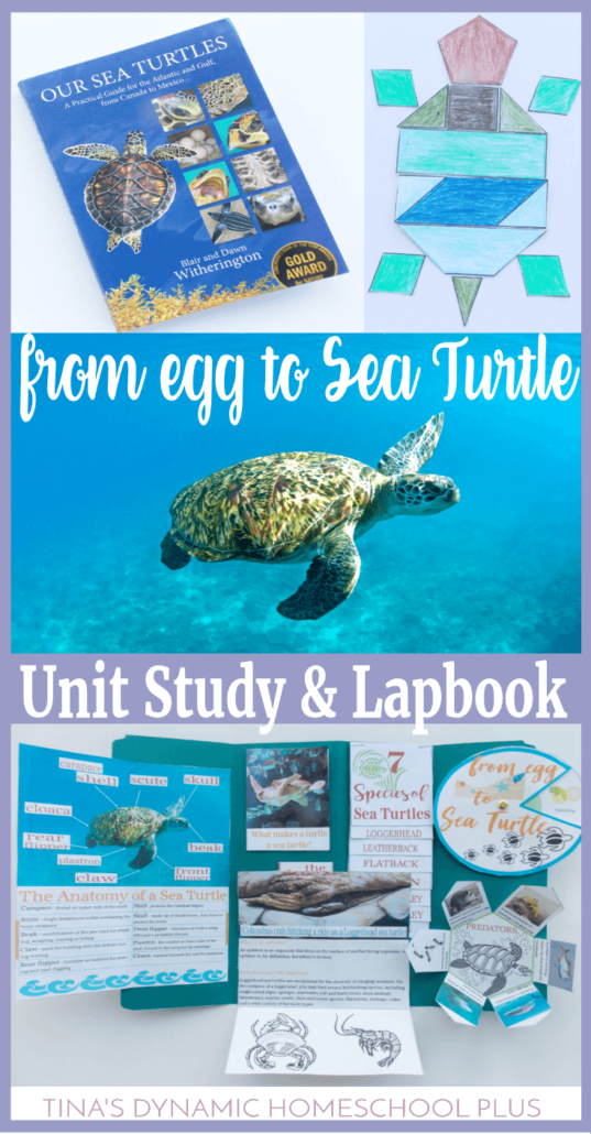 From Egg to Sea Turtle Nature Unit Study & Lapbook.