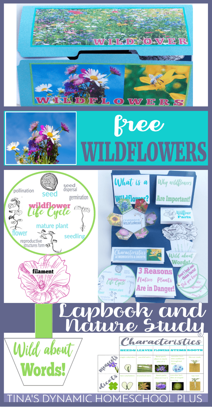 Your kids will love this free wildflower unit study and lapbook along with some hands-on ideas, crafts, lesson plans and fun activities. I hope they'll help your kids get excited about a fun nature study about wildflowers. CLICK here to grab it!